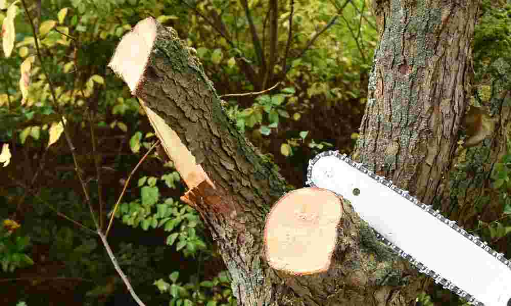 Sun Joe Electric Pole Saw Review