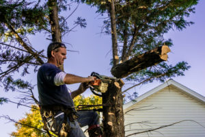 Best Gas Powered Pole Saws of 2019