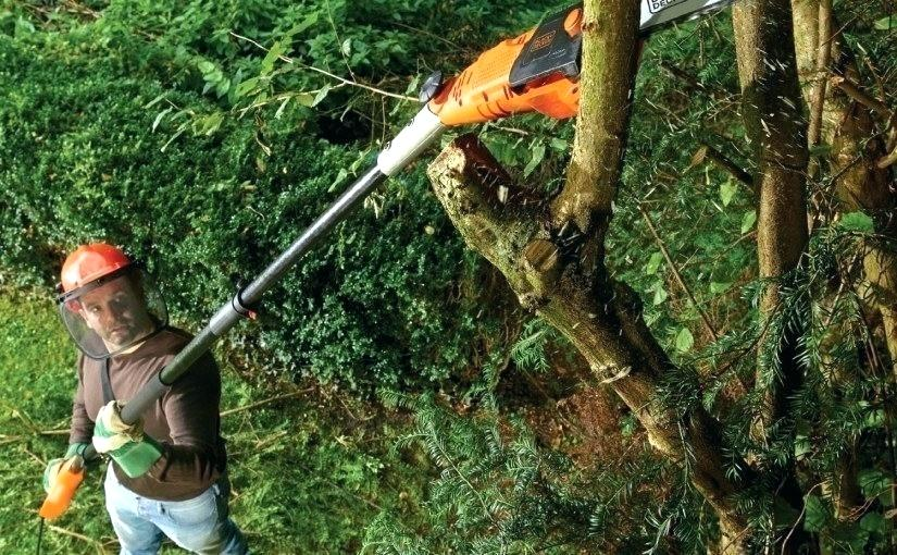 Best Manual Pole Saws for 2019