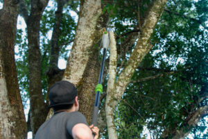 5 Best Pole Saws for 2020