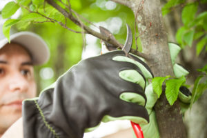 Must Have Tools For Proper Tree Care