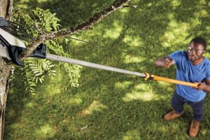 Top 8 Best Pole Saws on a Budget